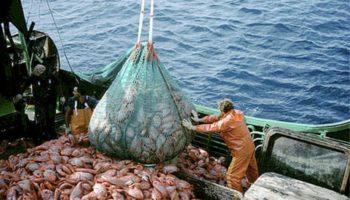 pesca-tonno-rosso