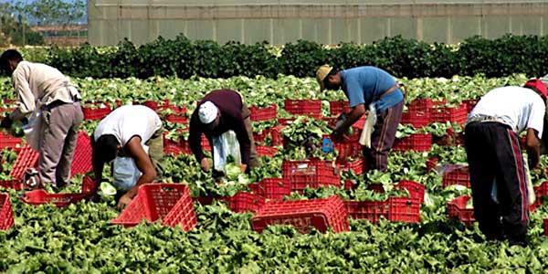 lavoratori-agricoli-stagionali