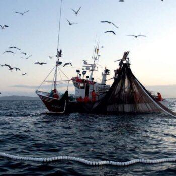 pesca__1452369861_151.51.119.144