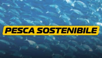 pesca sostenibile – blog